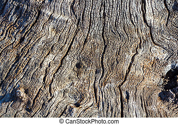 Background with cracks of a dry trunk