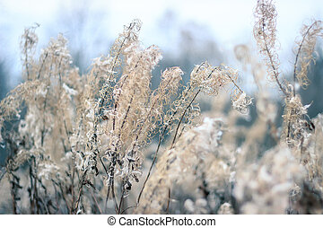 Background with fireweed