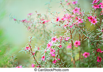 Background with flowers - blossoms (shallow depth of field)