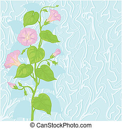 Background with flowers Ipomoea - Ipomoea flowers and leaves...