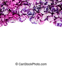 Background with flowers of lilac isolated on white.