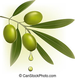 background with green fresh olives. Vector illustration.