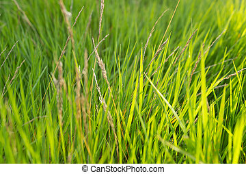 Background with green grass.