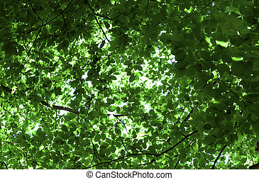 Background with green leaves of trees
