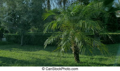 Background with green palm trees.