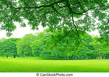 Background with green trees in park