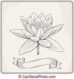 Background with hand drawn sketch beautiful water Lily flower. Vector illustration