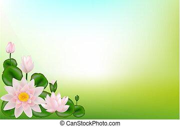 Background with Lotuses - Background with Lotuses, leaves...