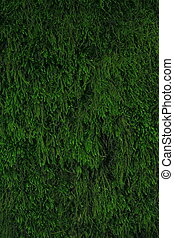 Background with moss. - Background with moss, ready for your...