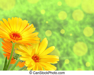 Background with orange flowers