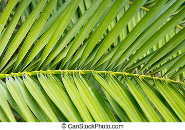 Background with palm leaves