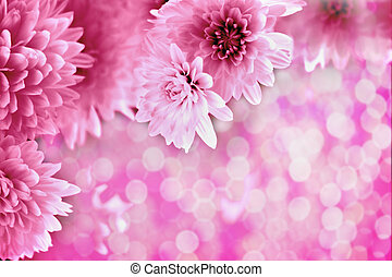 background with pink chrysanthemums