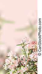 Background with pink flowers