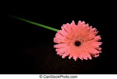 Background with pink gerbera