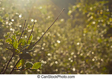 Background with plant on the light on sunrise in the forest