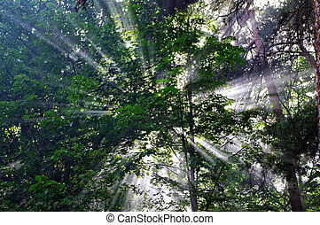 Background with rays of sun in the forest