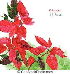 Background  with red poinsettia_3-04
