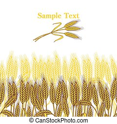Background with ripe yellow wheat ears, vector illustration.