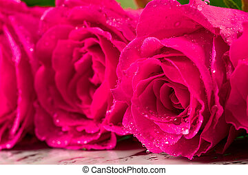 Background with roses closeup. Shallow depth of field.