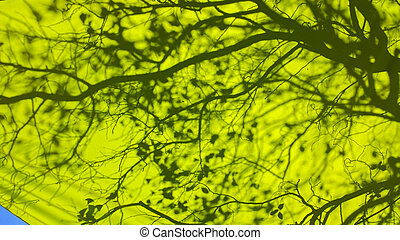 Background with shadows of tree branches colors on canvas