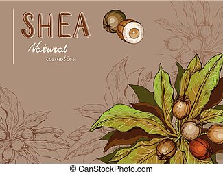 Background with Shea nuts and branch. Cosmetics and medical plant