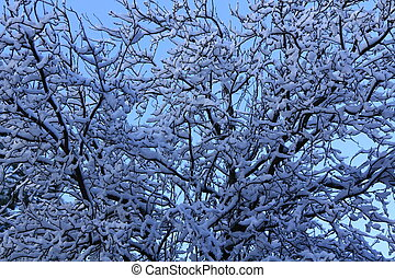 background with snowy branches