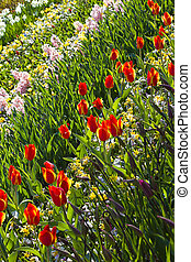 Background with spring flowers in garden