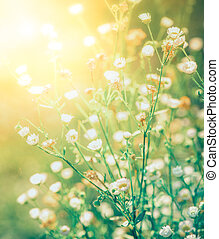 Background with summer flowers