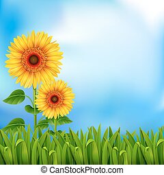 Background with sunflowers - Two yellow sunflowers on the...