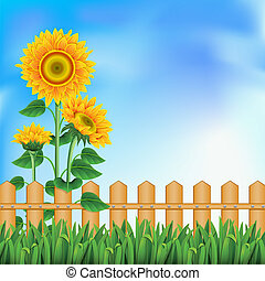 Background with a field of sunflowers and blue sky. Clipping Mask. Mesh.