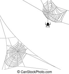 two spider webs - Background with two spider webs isolated...
