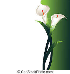 Background with White Callas - Vector background with two ...
