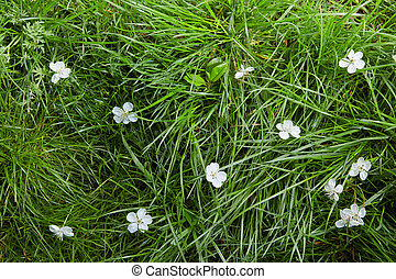 Background with white flowers in grass.