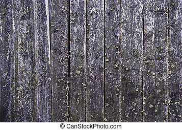 Background with wooden wall