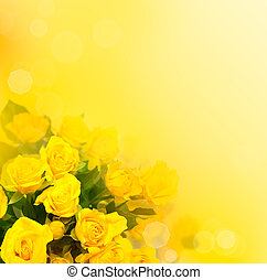 Background with yellow roses, beautiful blurred flowers
