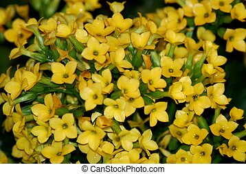 Background yellow flowers