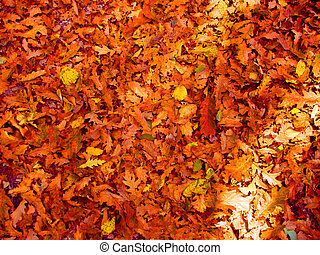 Backgrounds of leaves - Texture of autumnal leaves