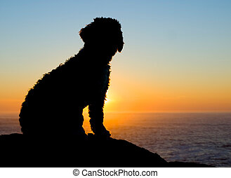 Backlight of a spaniel in a sunset.