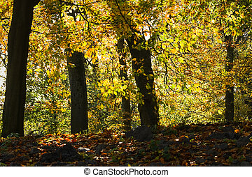 Backlight shining through trees in autumn