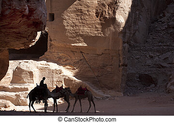 Three camels in backlight in the old city of Petra in Jordan