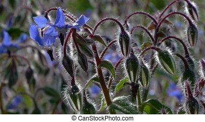 backlit blue flowers