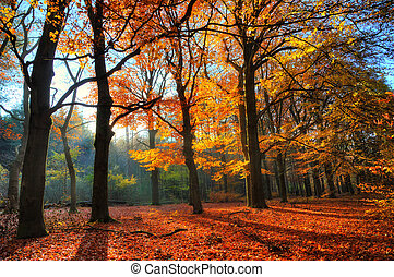 backlit, bosque, autum