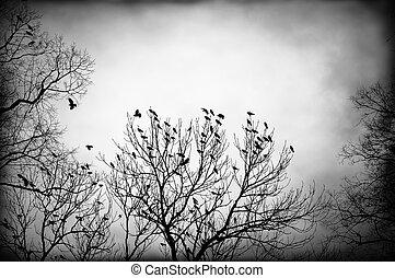Backlit crows in black and white - Dark backlit image of...