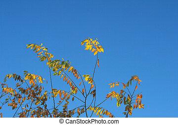 Backlit Fall Leaves
