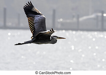 Backlit heron in flight over Douro river