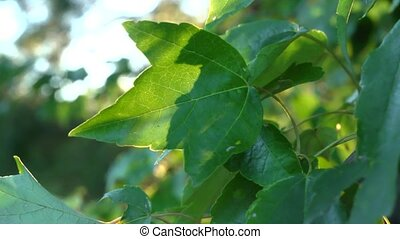 backlit leaf