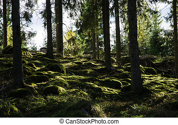 Backlit mossy forest ground