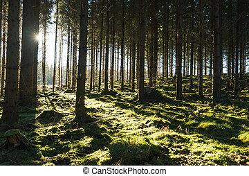 Backlit mossy forest