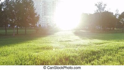 Backlit sun and tree branches. Children's Landscape Park of...