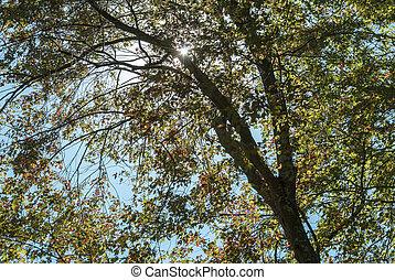Backlit tree at Borderland